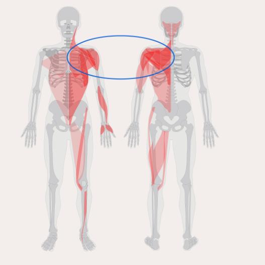 Diagnostická mapa svalového systému
