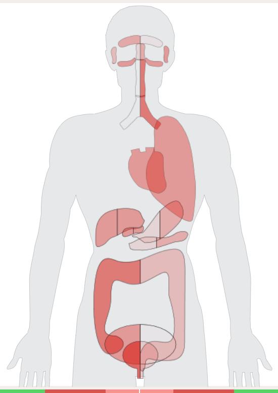 Diagnostická mapa vnitřních orgánů